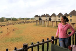 Salt Lick Lodge Safari