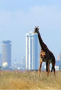 Nairobi Tours and Excursions